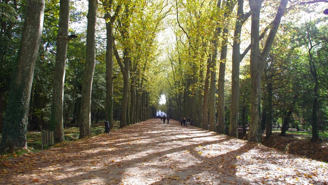 Allée du Chateau de Chenonceau