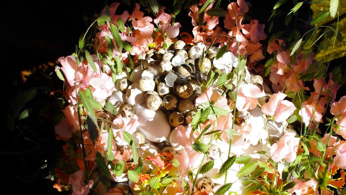 Fleur de jardin du Chateau de Chenonceau
