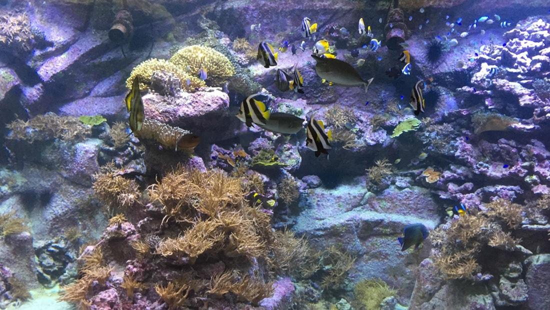 Grand Aquarium Amboise